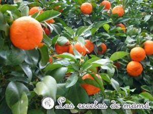 Naranjo-wtmk