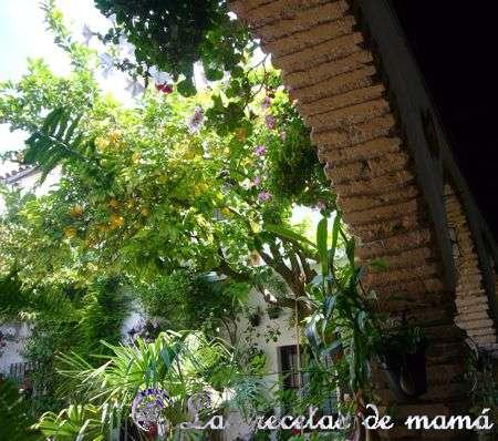 patios-de-cordoba-052wtmk